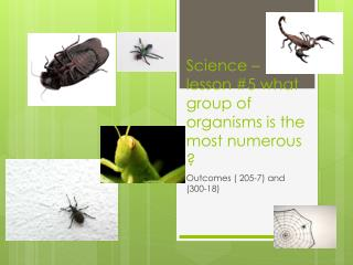 Science – lesson #5 what group of organisms is the most numerous ?