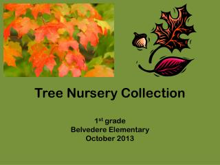 Tree Nursery Collection 1 st  grade  Belvedere Elementary October 2013