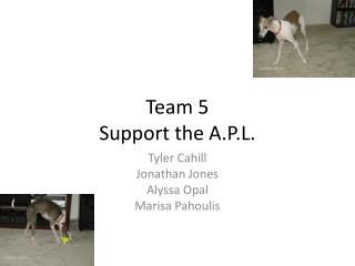 Team 5 Support the A.P.L.