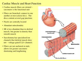 Cardiac Muscle and Heart Function