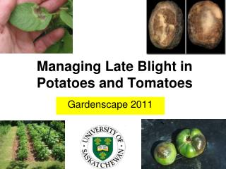 Managing Late Blight in Potatoes and Tomatoes