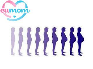 Pregnancy Week By Week - An Experience Beyond Expression