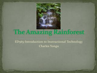 The Amazing Rainforest
