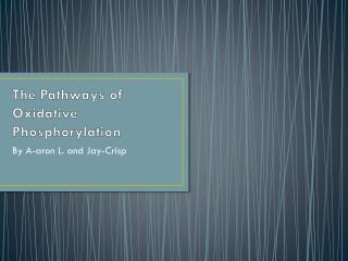 The Pathways of Oxidative Phosphorylation