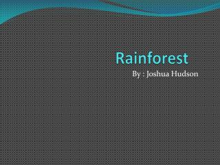 R ainforest