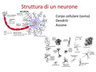 Struttura di un neurone