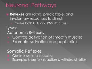 Neuronal Pathways
