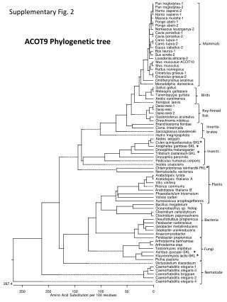 ACOT9  Phylogenetic tree
