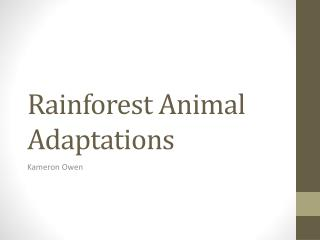 Rainforest Animal Adaptations