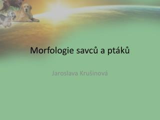 Morfologie savc? a pt�k?