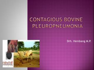 Contagious Bovine Pleuropneumonia