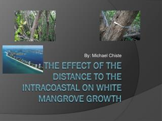 The effect of the distance to the  intracoastal  on white mangrove growth