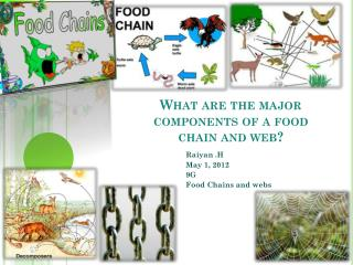 What are the major components of a food chain and web?