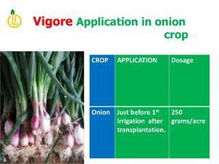 Vigore  Application in onion                                            crop