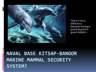 Naval base Kitsap- bangor marine mammal security system?