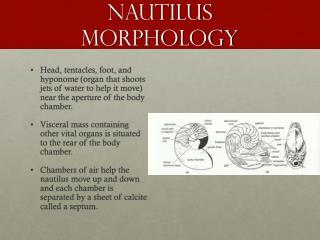 Nautilus Morphology