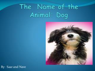 The   Name  of the  Animal : Dog
