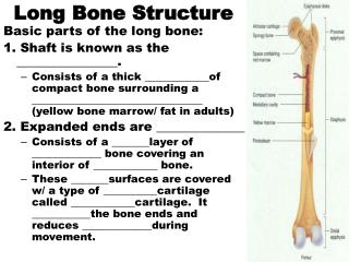 Long Bone Structure
