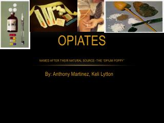 "OPIATES named after their natural source- the ""opium poppy"""