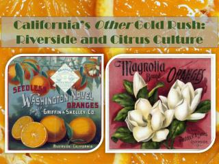 California's  Other  Gold Rush:  Riverside and Citrus Culture