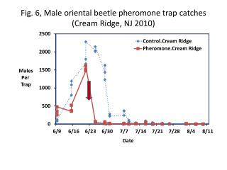 Fig. 6, Male oriental beetle pheromone trap  catches (Cream  Ridge, NJ  2010)