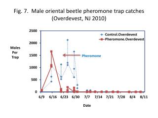 Fig. 7.  Male oriental beetle pheromone trap  catches ( Overdevest , NJ  2010)
