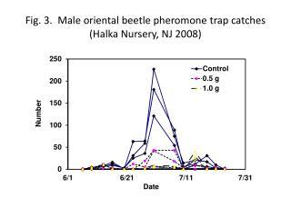 Fig. 3.  Male oriental beetle pheromone trap catches  ( Halka Nursery, NJ  2008)