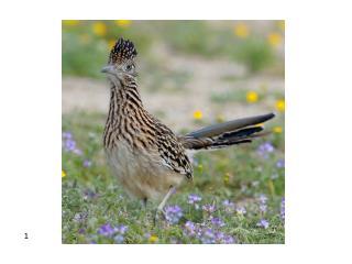 Ornithology Sight ID Quiz Apr