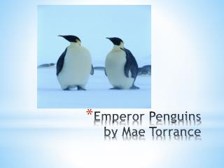 Emperor Penguins by Mae Torrance