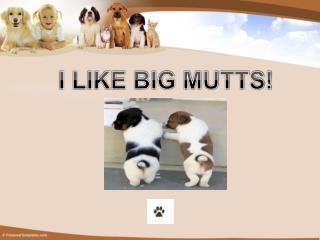 I LIKE BIG MUTTS!