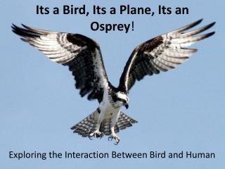 Its a Bird, Its a Plane, Its an Osprey !