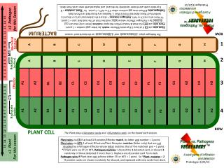 The Plant plays  4 Receptor cards  and   4 R-protein  cards  on the board each season.