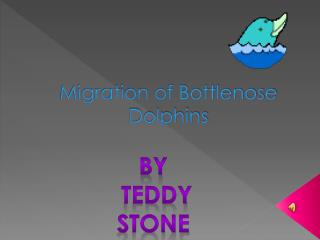 Migration of Bottlenose Dolphins