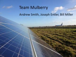 Team Mulberry