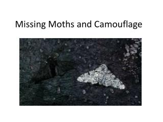 Missing Moths and Camouflage