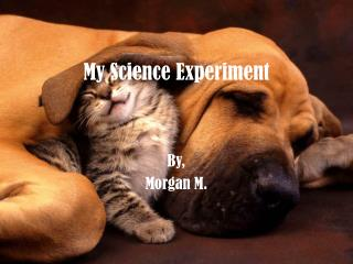 My Science Experiment