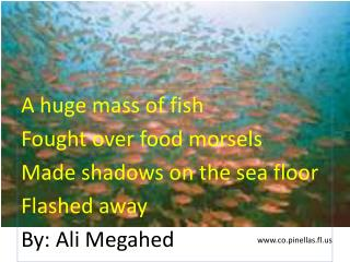 A huge mass of fish Fought over food morsels Made shadows on the sea floor Flashed away