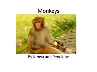 M onkeys