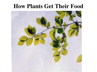 How Plants Get Their Food