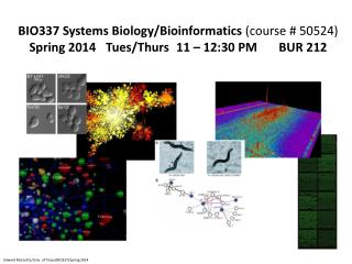 BIO337 Systems Biology/Bioinformatics  (course # 50524)