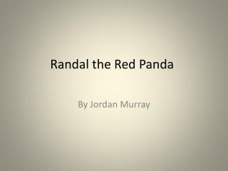 Randal the Red Panda