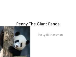 Penny The Giant Panda