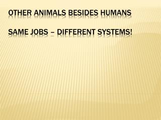 Other animals besides humans same jobs � different systems!
