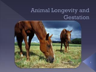 Animal Longevity and Gestation