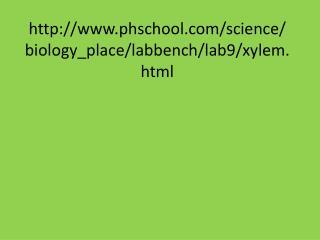 phschool/science/biology_place/labbench/lab9/xylem.html