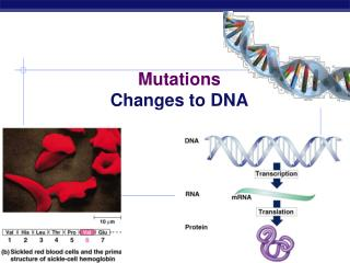 Mutations Changes to DNA