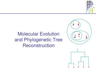 Molecular Evolution and Phylogenetic Tree Reconstruction