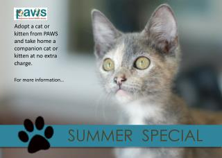 Adopt a cat or kitten from PAWS and take home a companion cat or kitten  at no extra charge .