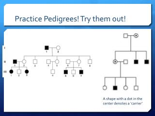 Practice Pedigrees! Try them out!