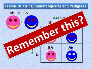 Lesson 18  Using  Punnett  Squares and Pedigrees